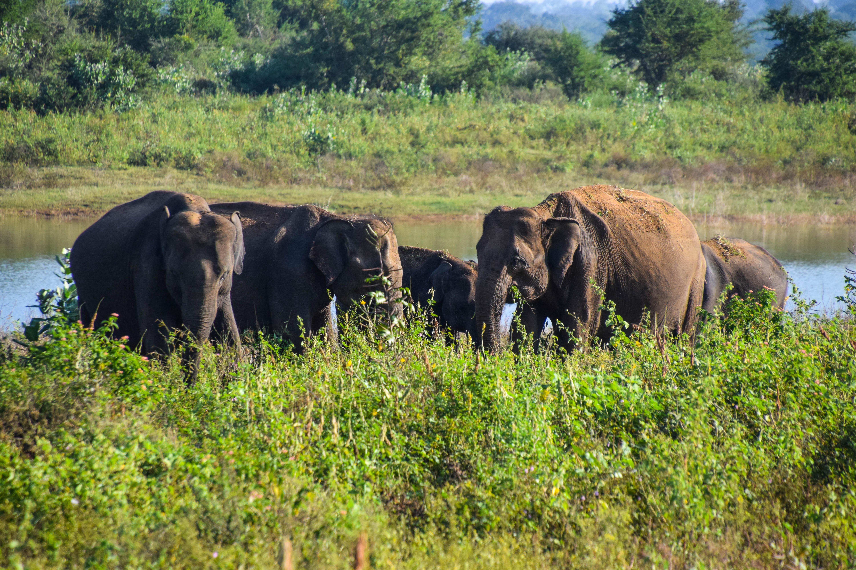 Safari de Uda Walawe